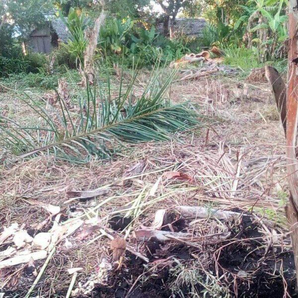 Côté ville préparation du terrain pour le potager… quelques arbres bien costauds qui ne facilitent pas la tâche !!